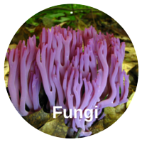 Fungi Cleaning Services